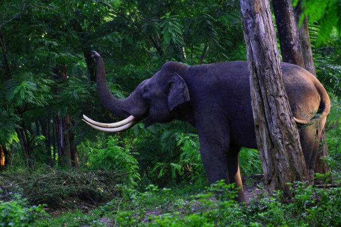 Exciting Wildlife Sanctuaries