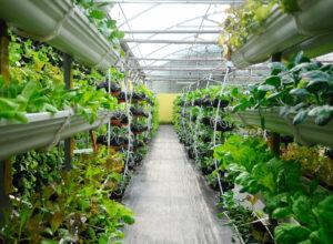Advantages of Vertical Farming