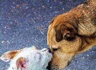 adopted shelter dog